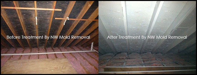 Before/After Attic Mold Removal